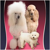 Aprils Doggie Spa Dog Cat Grooming Waynesboro PA